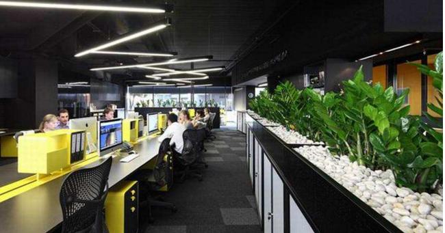 绿色植物办公室装饰案例